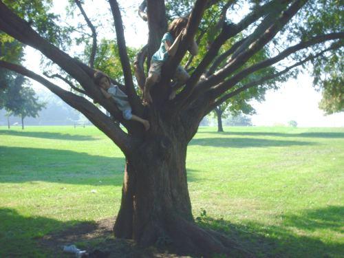 Treeclimb1